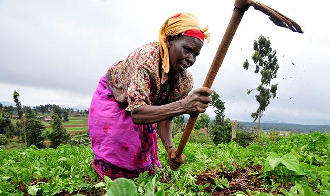 A Kenyan woman farmer at work in the Mount Kenya region - CIAT - 2DU Kenya 86
