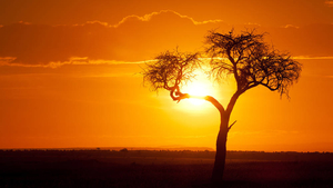 How impact investing brings solar power to Africa