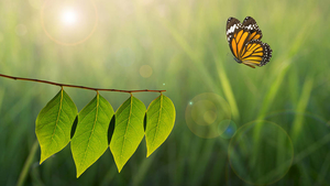 Peer conformity drives subsidiaries towards corporate social responsibility - Jacqueminet and Durand - ©Fotolia - pkproject