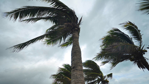 Stormy weather: Overestimating risk in the wake of disaster - with Adrien Matray - ©Fotolia - behindlens