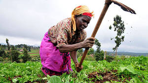 A Kenyan woman farmer at work in the Mount Kenya region - By CIAT - 2DU Kenya 86